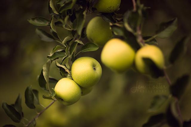 Week 35 - Fruit