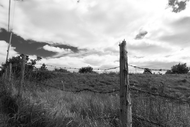 Barb Wire Fence - Monochrome