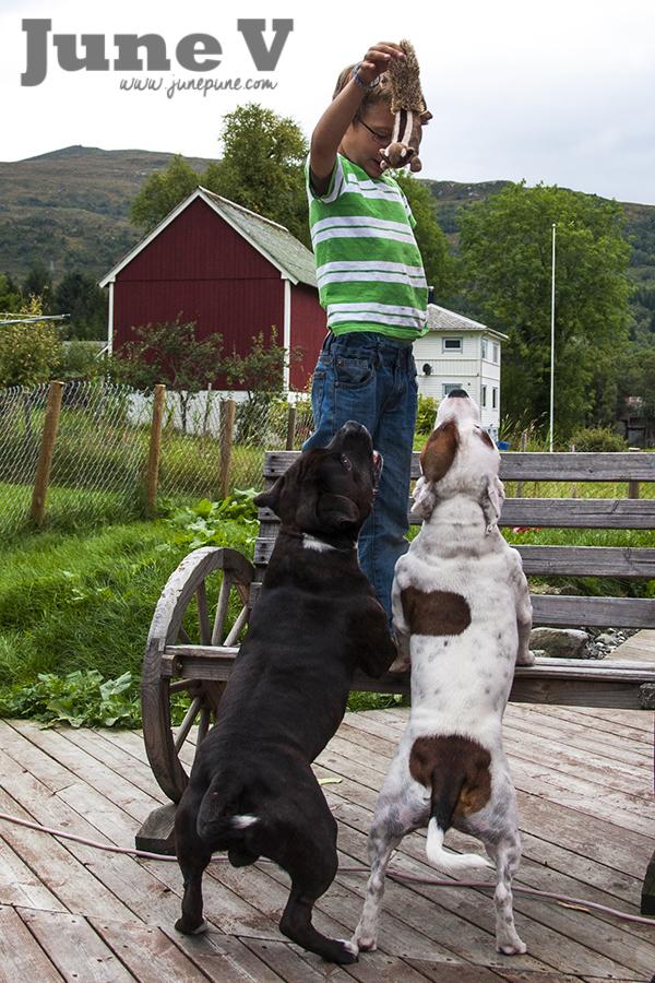 Doggiebag September