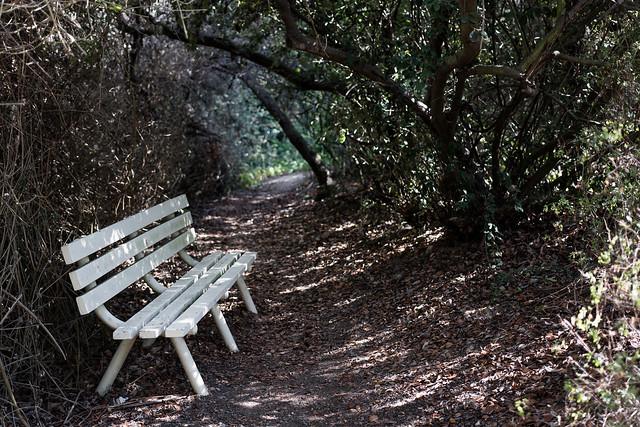 shady bench
