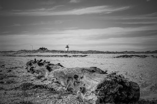 bw lighthouse beach landscape ma provincetown capecod driftwood