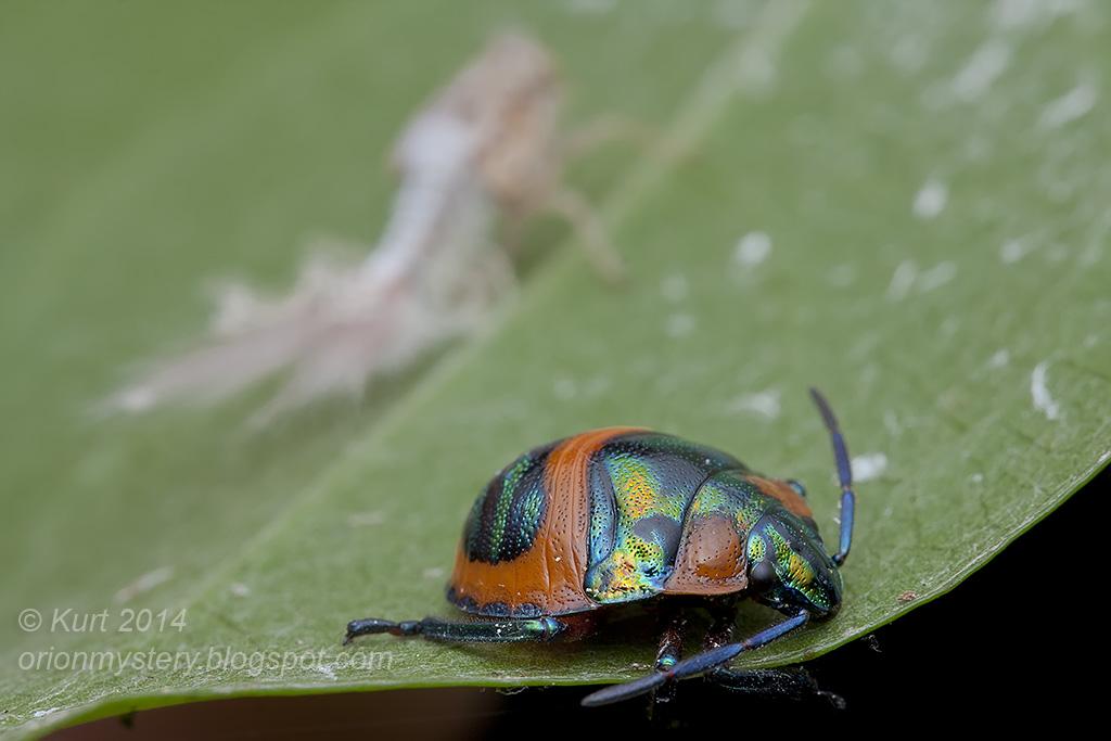 Mixed Bugs & a bonus cutie