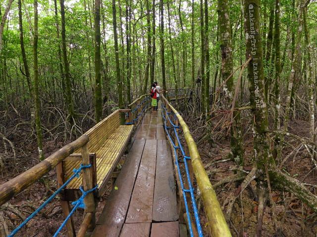 Rest stops along the way. Mangrove Eco Park, El Nido, Palawan, Philippines