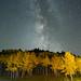 Fall(ing) Stars