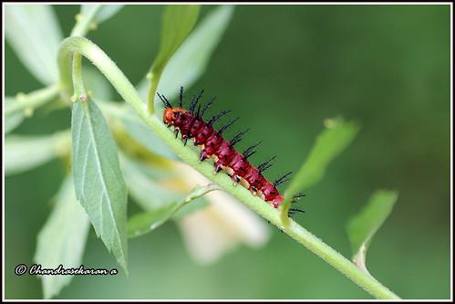 6502 - caterpillar