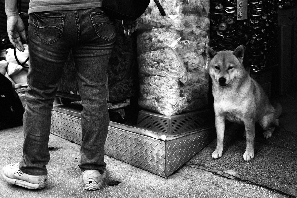 A dog in Taipei