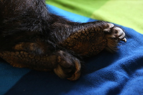 Milly's hind paw