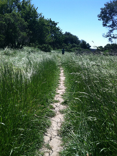 Trail in tall grass, Grass Valley Trail 5-11-14