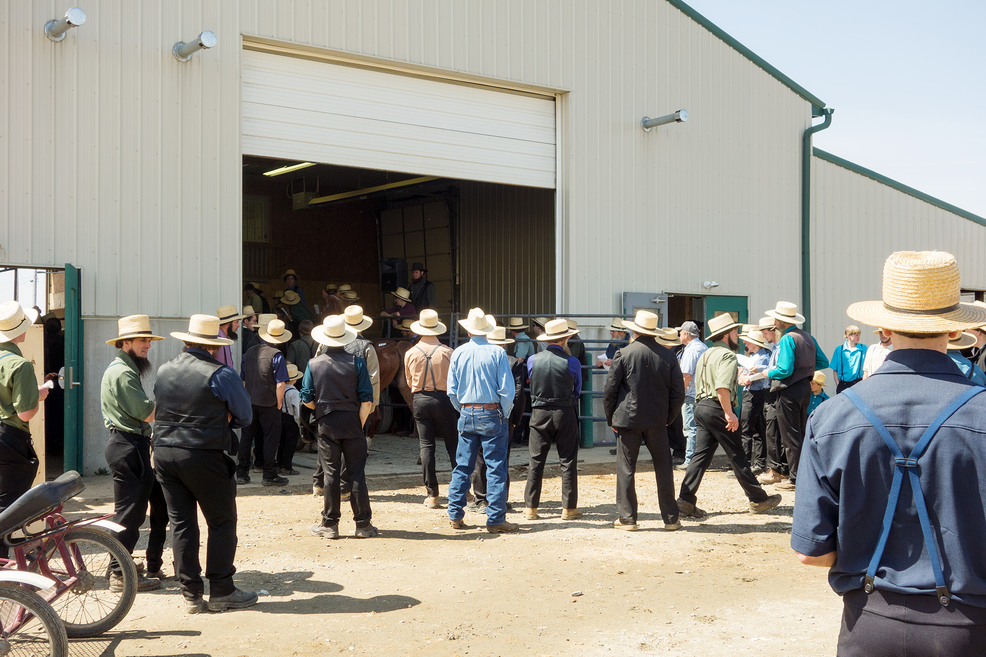 Livestock speculators at the Mud Sale.