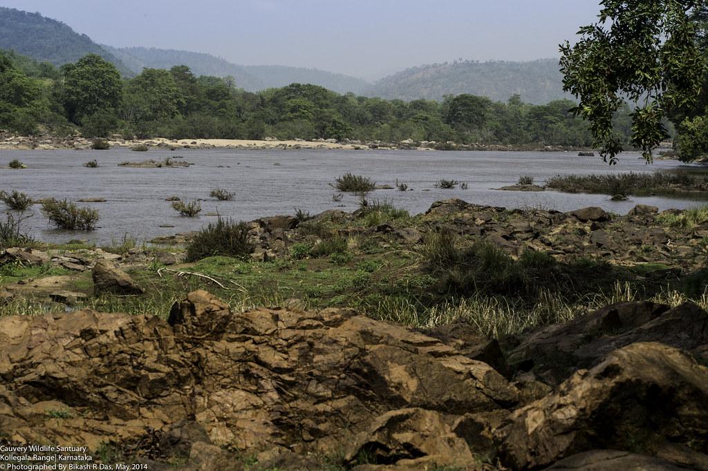 Cauvery Wildlife Sanctuary - Kollegala Range