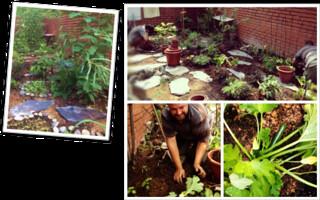 在住家後院打造食物叢林,圖片來源:Edible Gardens