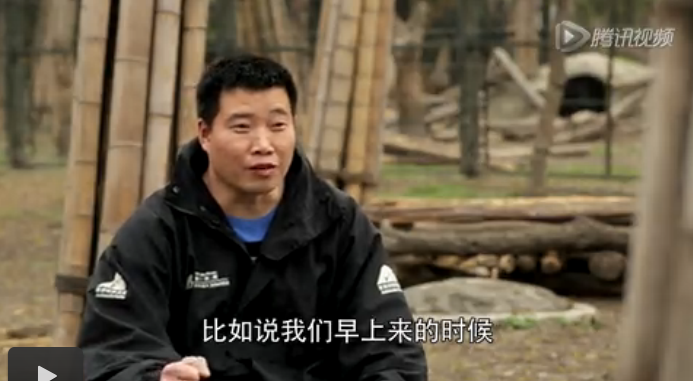 Ou Jun talks to the camera while scattering enrichment and food