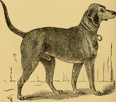 """Image from page 61 of """"Breeding, training, management, diseases & c. of dogs:"""" (1877)"""