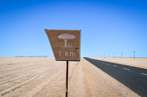 Tree in the desert?