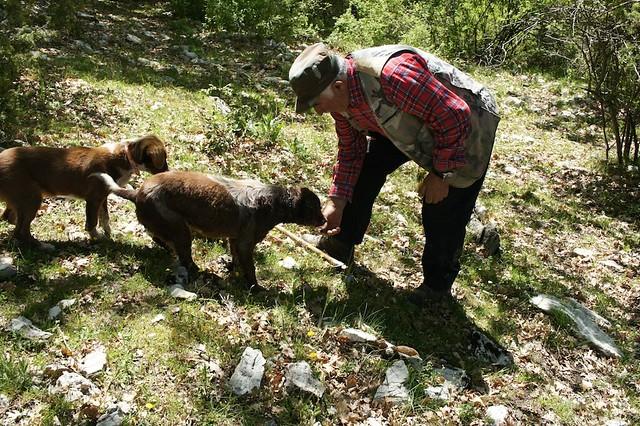 truffle-dogs-bartoli-umbria-cr-brian-dore