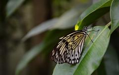 1.Bild Schmetterling