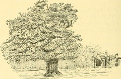 "Image from page 116 of ""Essex naturalist: being the journal of the Essex Field Club"" (1887)"