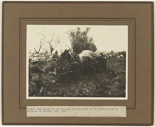 A mule team bogged in the mud near Potijze Farm, Ypres