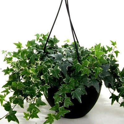 Mejores plantas de interiores - Mejores plantas para interior ...