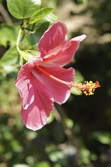 Flora - 5