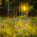 INTO THE WOODS {Explore front page} by Peeblespair