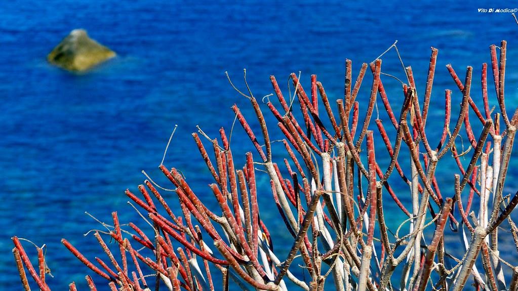Rosso Corallo vs Blue Elettrico