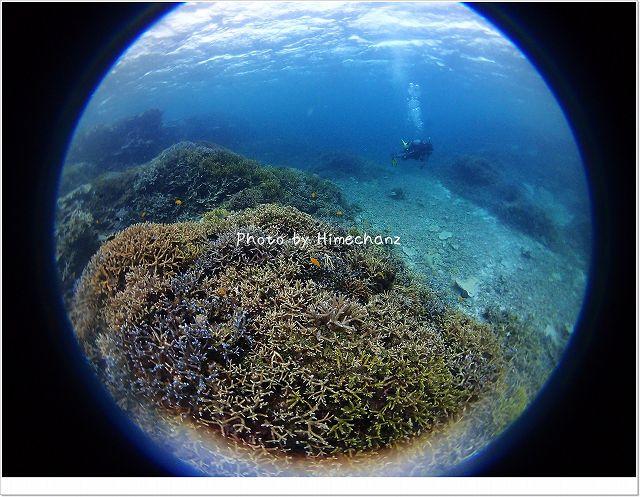 サンゴがとてもきれいでした!
