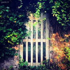 2014-07-30-Boissy.la.Riviere-110-gaelic.fr_IMG_8794 copie