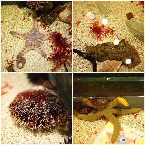 國立海洋生物博物館7