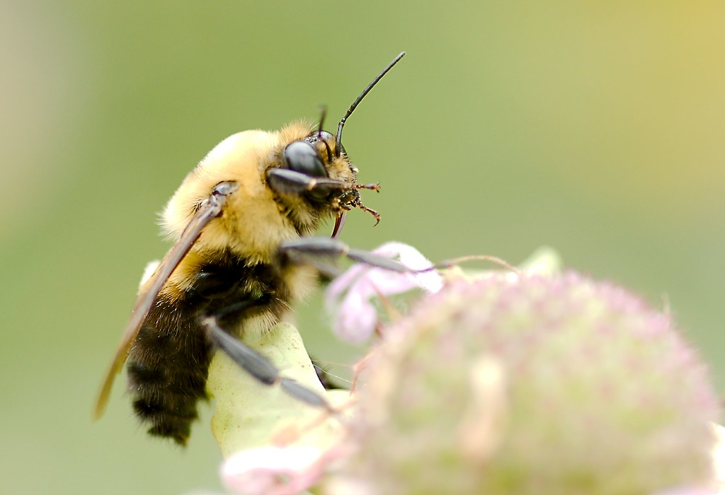Bee_18