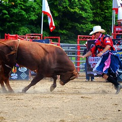 And what happened next? #rodeo #clown #thornbury #ontario #bull #cedarrunrodeo #ouch
