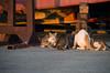 Stray cats feed