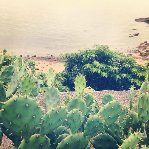 海辺のサボテン