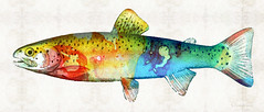 Rainbow Trout Art by Sharon Cummings