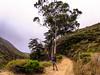Fiscalini Ranch Preserve Cambria, CA 2014-09-18