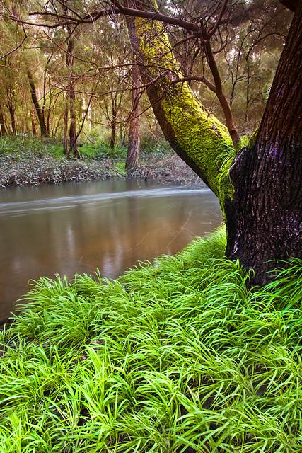 Lefroy Brook, Pemberton, Western Australia