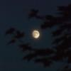 Hazy Moon over Ottawa, Sept. 6, 2014