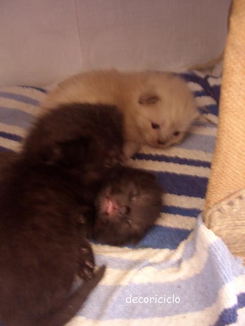 gattini seconda settimana 6