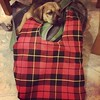 Buachaille inspects @rabiesonmyshoe new Wallace wrist project bag. He approved.