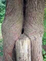 Tree porn