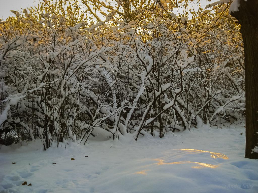 солнечные зайчики на снегу  15:26:59 IMG_1793
