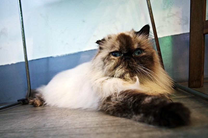 貓X台南X隱身巷弄的小幸福 [圖文很多注意]