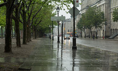 tree, road, lane, street, neighbourhood,