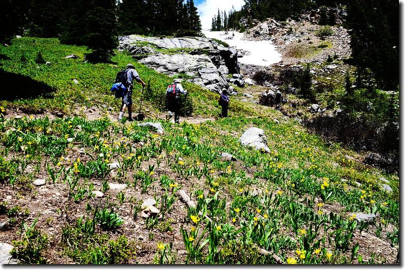 Glacier Lily 22
