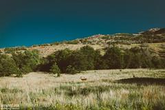 Wichita Mountains, OK