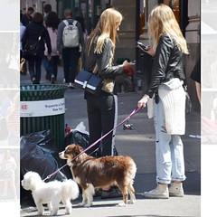 @viktoriakvalsvik and @ingakrohn never leave him without their dogs