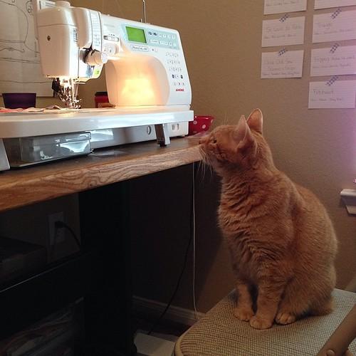 185:365 Helper kitty arrived to inspect my progress.