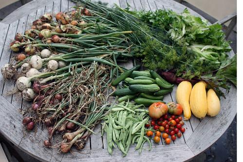 harvest 9211