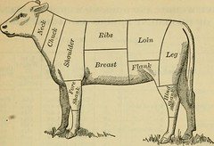 "Image from page 175 of ""A handbook for farmers and dairymen"" (1897)"