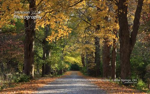 road autumn trees fall nature leaves landscape fallcolors fallfoliage yellowsprings glenhelen